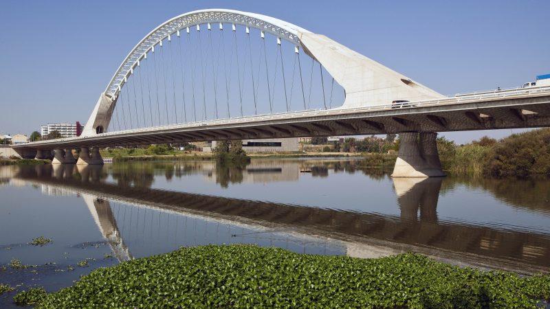 Camalote en el río Guadiana a su paso por Mérida